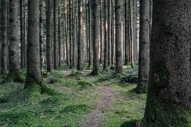 Forest Track XI