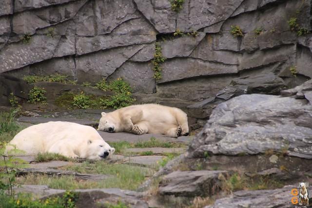 Tierpark 21.06.20 Wasserzeichen (32)