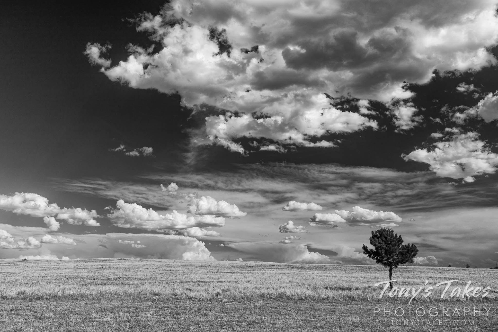 Lone tree on the Colorado plains