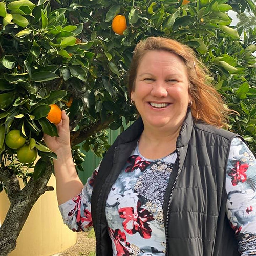 colheita de laranjas