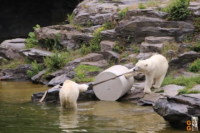 Tierpark 21.06.20 Wasserzeichen (76)