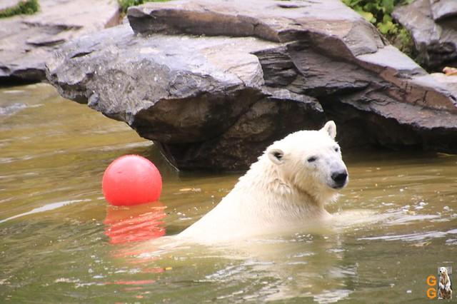 Tierpark 21.06.20 Wasserzeichen (60)
