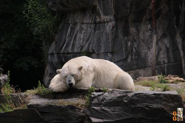 Tierpark 21.06.20 Wasserzeichen (31)