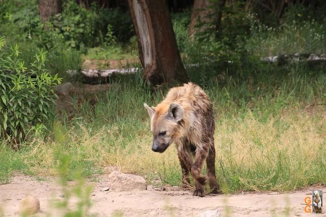 Tierpark 21.06.20 Wasserzeichen (25)