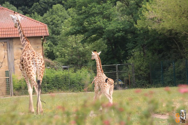 Tierpark 21.06.20 Wasserzeichen (22)