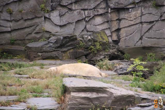 Tierpark 21.06.20 Wasserzeichen (4)