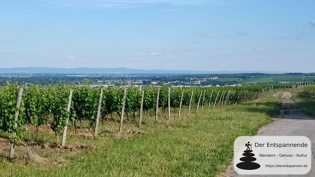 Wandern auf der Laubenheimer Höhe: Blick übers Rheintal zum Odenwald