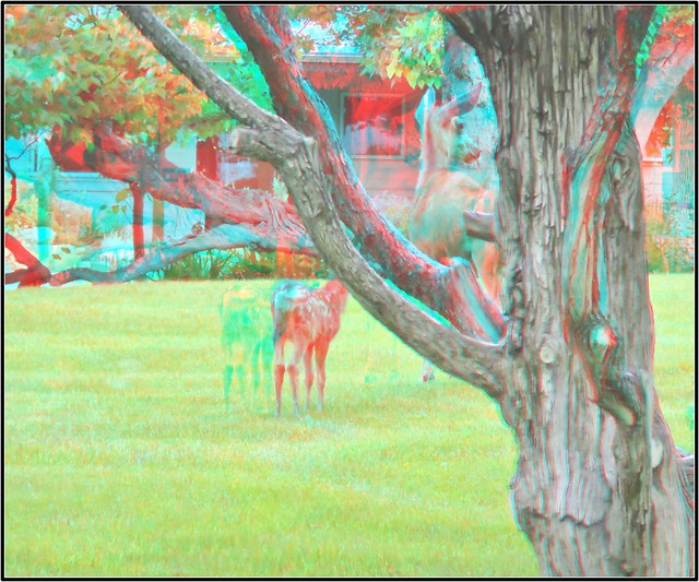 IMG_1544ff1-Anaglyph Photo/3D
