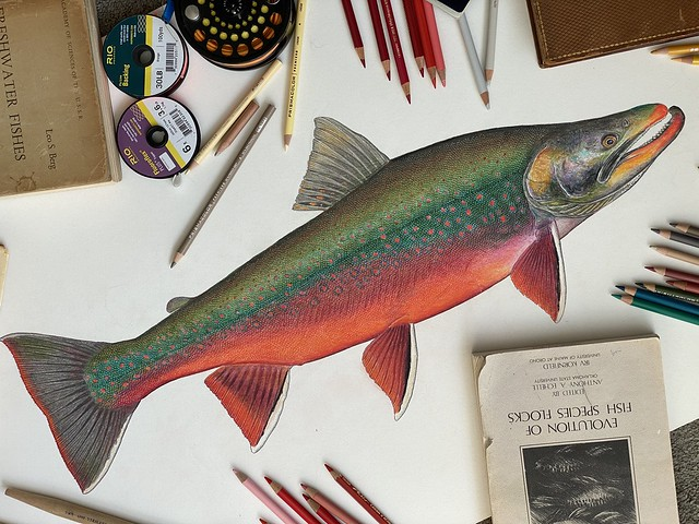 Dolly Varden Art