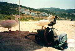 Ikaria - 1996