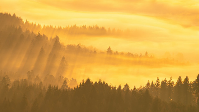Golden Hour during an Inversion in the Northern Black Forest
