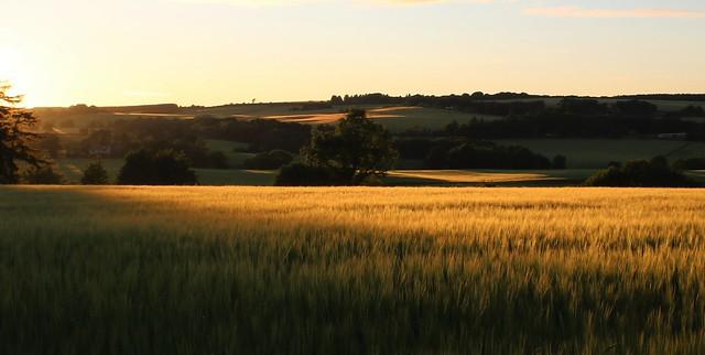 Late evening sunlight