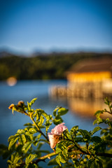 Morning Dew And Boat House