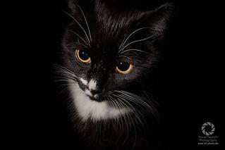 Kira Katze