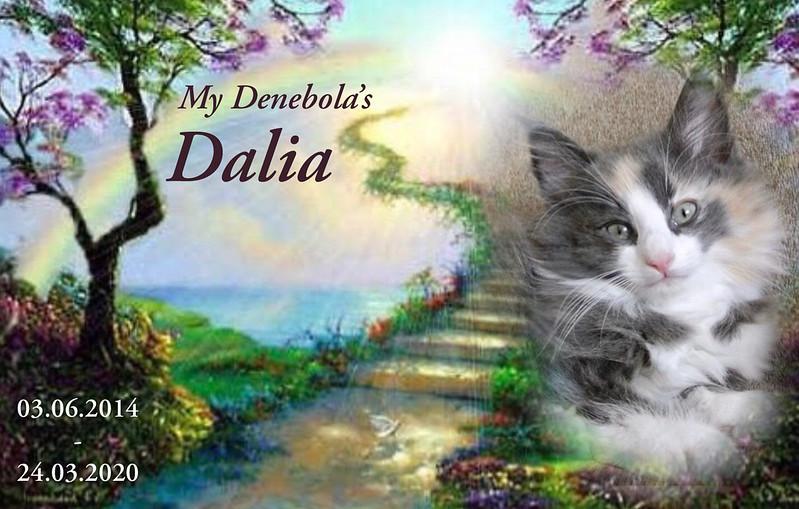 Memory of Dalia