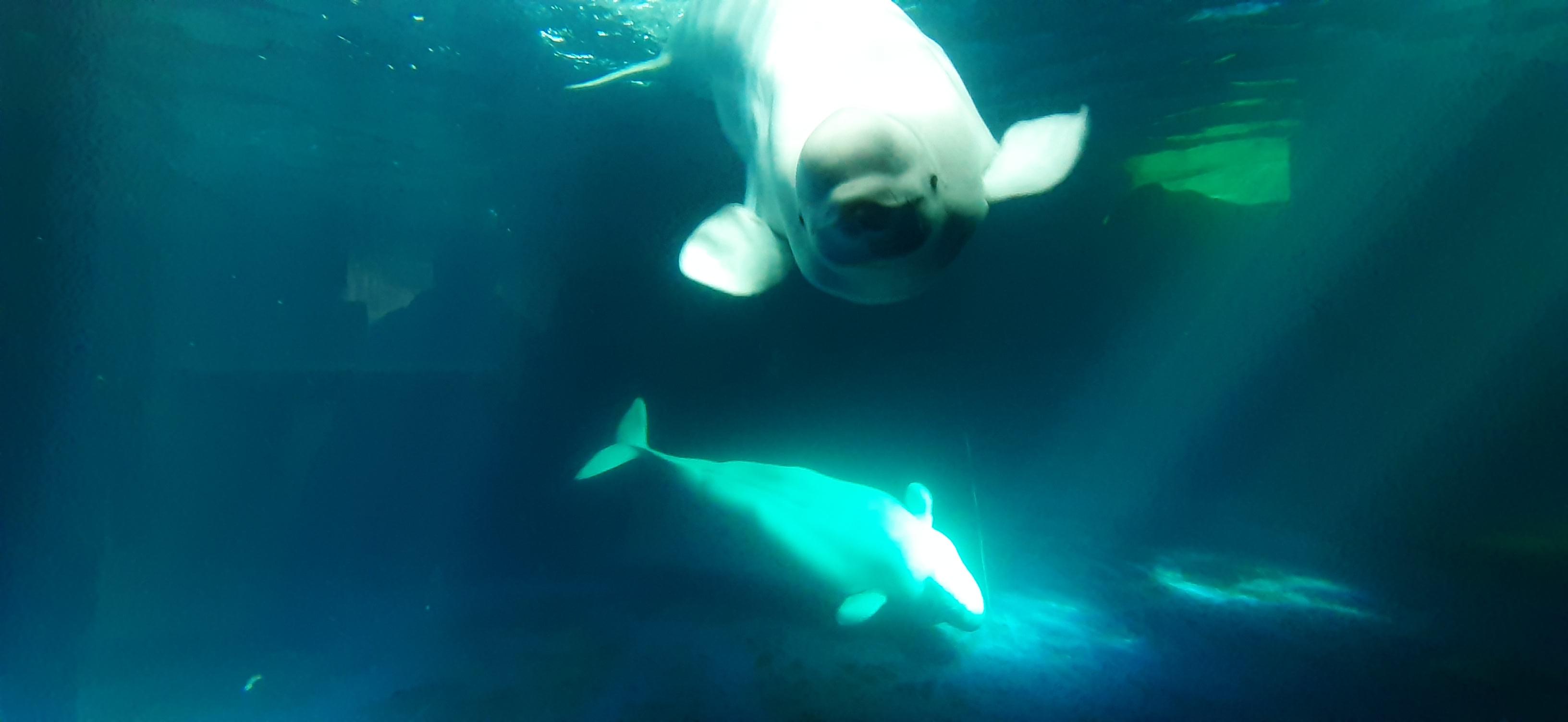 Puffin & Beluga Sanctuary