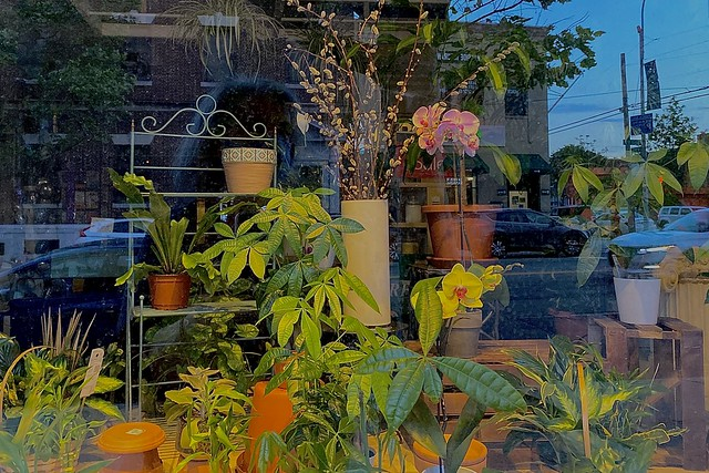 178/366 Florist's Window