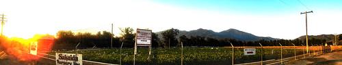 trabucocanyon california photo digital summer panorama mountains thesaddleback sunset goldenhour nursery plantnursery