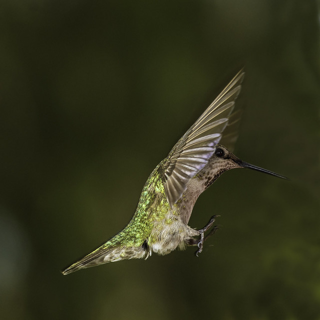 Hummingbird Yoga  Class