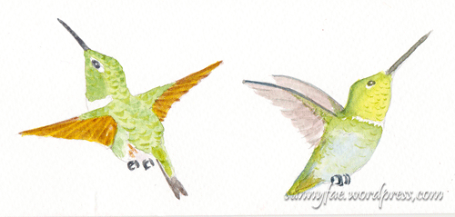 hummingbird colour tests 3+4