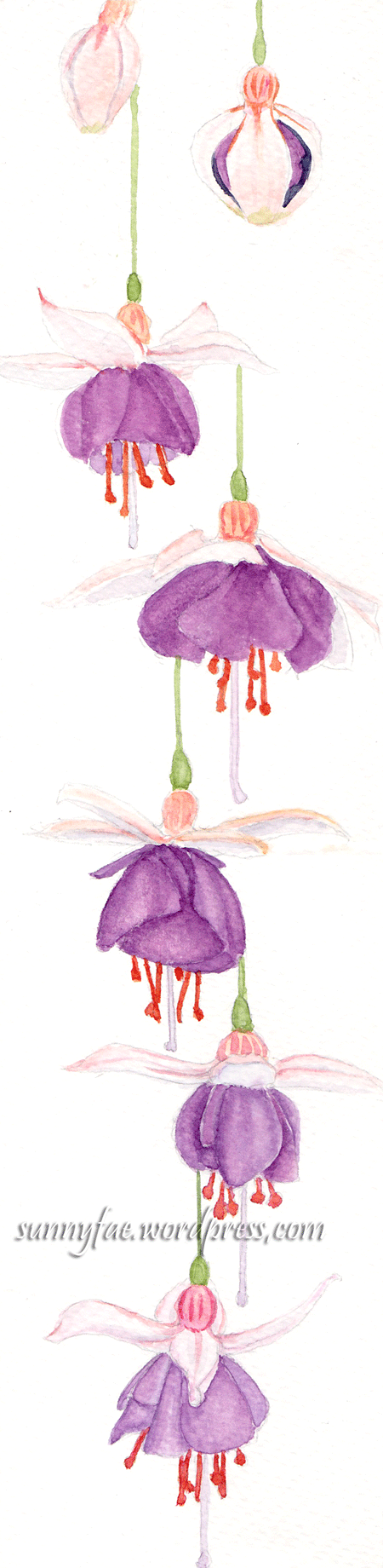 long watercolour fuchsia