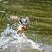 Kingfisher -202007022698.jpg