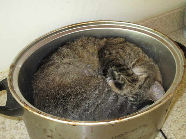 Harri decided to sleep in my crock pot frame.