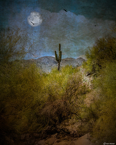 arizona artisticeffects buckeye cacti cactus composite desert fineart landscape plants saguaro skylineregionalpark texture textured unitedstatesofamerica