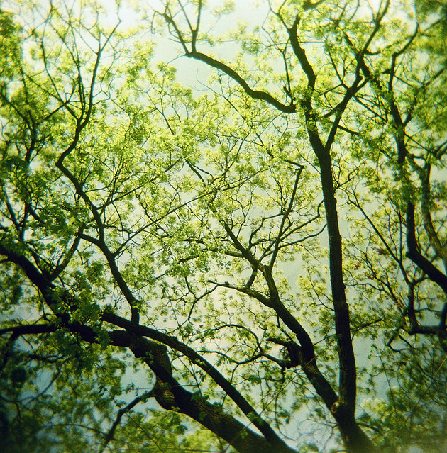 Spring, a Holga and a tree