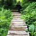 Surprise Lake Stairs