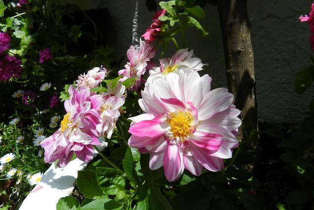 flor del patio en barrio del Alcázar Viejo Cordoba 03