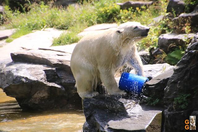 54Eigene Bilder Tierpark Friedrichsfelde 04.07.20 Bulk Watermark