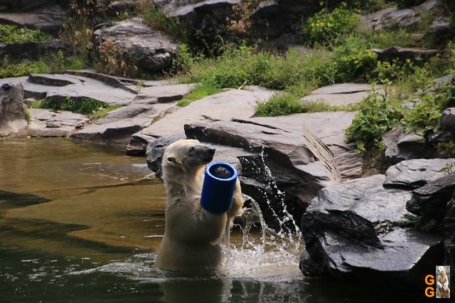 51Eigene Bilder Tierpark Friedrichsfelde 04.07.20 Bulk Watermark