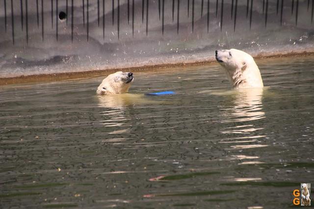 47Eigene Bilder Tierpark Friedrichsfelde 04.07.20 Bulk Watermark