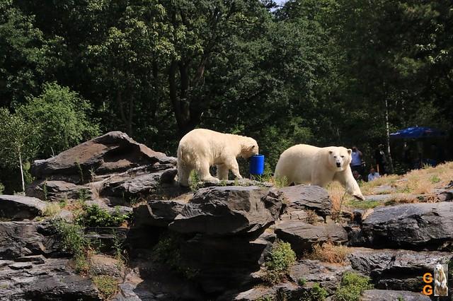 41Eigene Bilder Tierpark Friedrichsfelde 04.07.20 Bulk Watermark