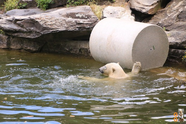33Eigene Bilder Tierpark Friedrichsfelde 04.07.20 Bulk Watermark