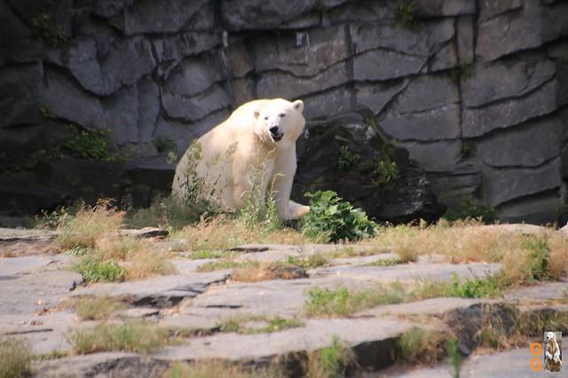 29Eigene Bilder Tierpark Friedrichsfelde 04.07.20 Bulk Watermark