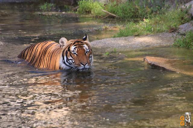 24Eigene Bilder Tierpark Friedrichsfelde 04.07.20 Bulk Watermark