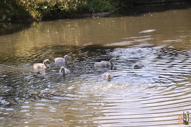 16Eigene Bilder Tierpark Friedrichsfelde 04.07.20 Bulk Watermark