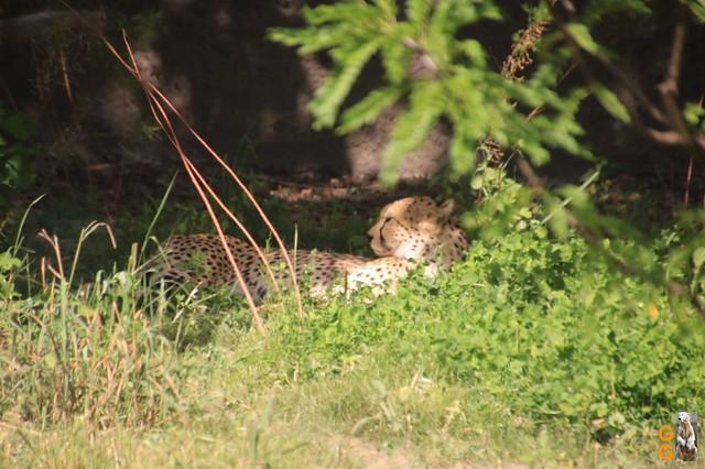 17Eigene Bilder Tierpark Friedrichsfelde 04.07.20 Bulk Watermark