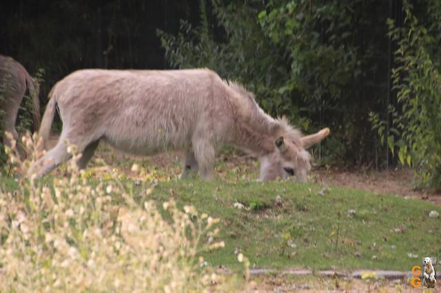 Zoo 26.06.2020 Wasserzeichen (43)