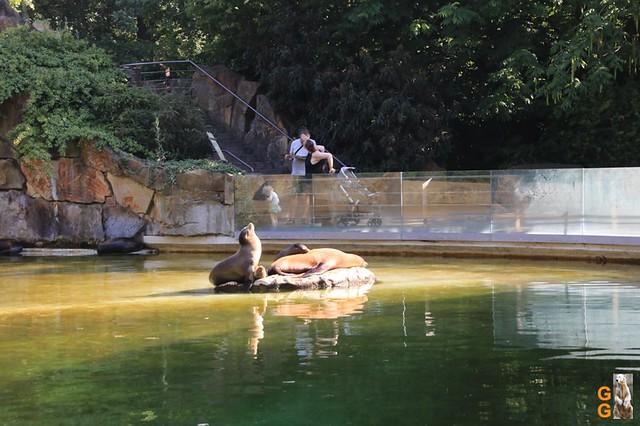 Zoo 26.06.2020 Wasserzeichen (38)