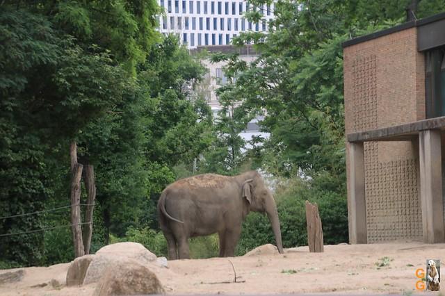 Zoo 26.06.2020 Wasserzeichen (4)