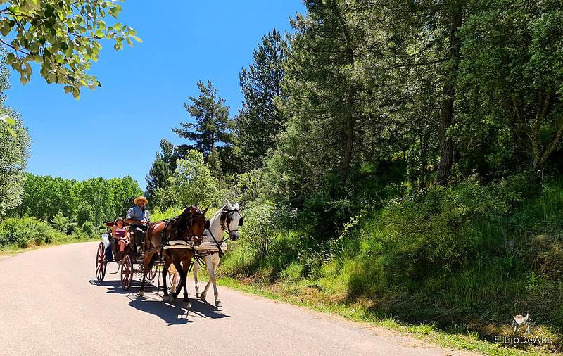 Un día en Huerta de Rey y su entorno (23)