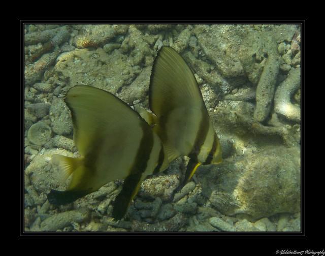 Snorkeling Pulau Besar Perhentian Islands Malaysia