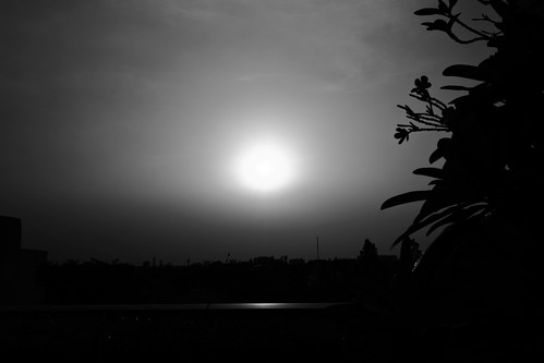 plants silhouette blackandwhite bw sunset