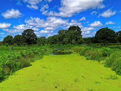 """Green stream"""