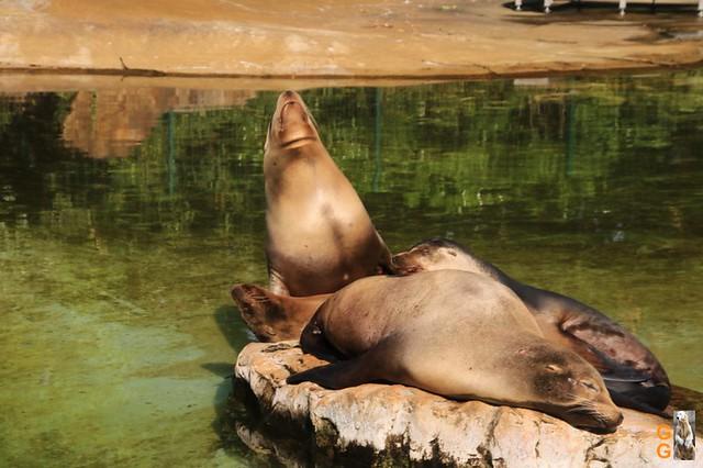 Zoo 26.06.2020 Wasserzeichen (39)