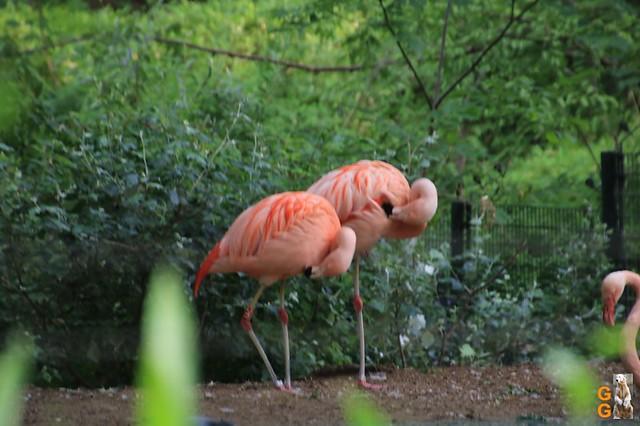 Zoo 26.06.2020 Wasserzeichen (16)