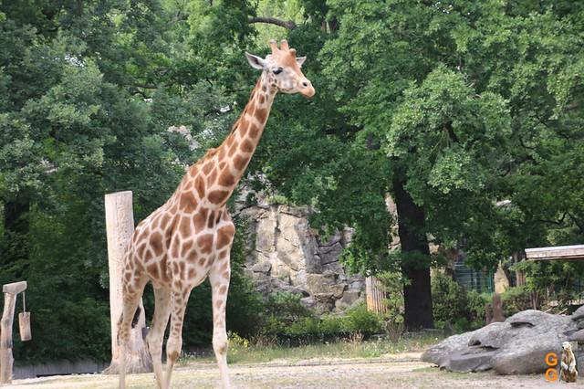 Zoo 26.06.2020 Wasserzeichen (14)